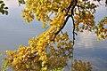 Trebon Wittingau (26841021889).jpg