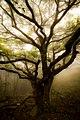 Tree Tai Mo Shan Hong Kong (203226749).jpeg