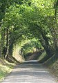 Tree Tunnel on Balcombe Lane - geograph.org.uk - 67216.jpg
