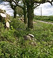 Tree clearance on Bwlchgwynt rd. - geograph.org.uk - 1313959.jpg