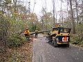 Tree clearing at Target Rock National Wildlife Refuge (NY) (8152094890).jpg