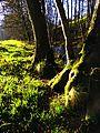 Trees - panoramio (24).jpg