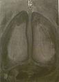 Tricot 2001 - The humzn body (anatomy) 004.jpg