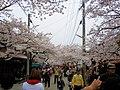 Triumphal Return Cherry Blossom Street.jpg