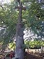 Trzeszczany, grób Młockiego.jpg