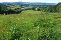 Twmbarlwm, from a Meadow.jpg