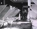 U.S. Army Evacuation Hospital No.13, Walferdange, Luxembourg Interior view- Medical Ward.jpg