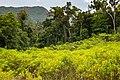 USAID Measuring Impact Conservation Enterprise Retrospective (Philippines; Nagkakaisang Tribu ng Palawan) (25422051717).jpg