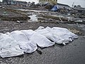 US Navy 050101-O-XXXXB-077 Trash and debris surround the bodies of deceased in down town Aceh, Sumatra following a massive Tsunami that struck the area on the 26th of December 2004.jpg