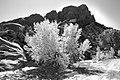 UTAH - Along Burr Trail (10-14-11) (3) (11117867935).jpg