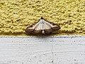 Unidentified-butterfly-20190610-145504.jpg