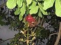 Unidentified Plant in Odisha 02.jpg