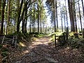 Up into Fernworthy Forest - April 2015 - panoramio.jpg
