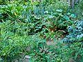 Vegetable garden 1.JPG