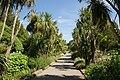 Ventnor Botanic Garden in August 2011 5.JPG