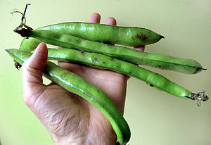 Vicia faba, the broad bean, fava bean, faba be...