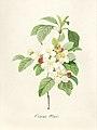 Vintage Flower illustration by Pierre-Joseph Redouté, digitally enhanced by rawpixel 16.jpg