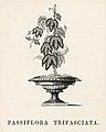Vintage illustrations by Benjamin Fawcett for Shirley Hibberd digitally enhanced by rawpixel 70.jpg
