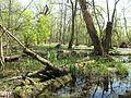 Vogelschutzgebiet Altfriedland 05.jpg