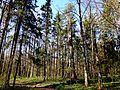 Volokolamsky District, Moscow Oblast, Russia - panoramio (23).jpg