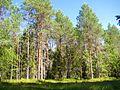 Vozhegodskiy r-n, Vologodskaya oblast', Russia - panoramio (118).jpg