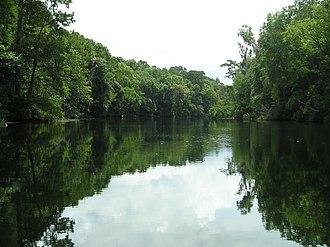 Wakulla River - Wakulla River between the Upper and Lower Bridges.