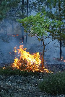 Un incendie est un feu violent et destructeur pour les activités humaines ou la nature. L'incendie est une réaction de combustion non maîtrisée dans le temps et l'espace. dans DOCUMENT 220px-Waldbrand-Bodenfeuer