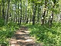 Walking through the woods at Effigy Mounds, in the great state of Iowa - panoramio.jpg