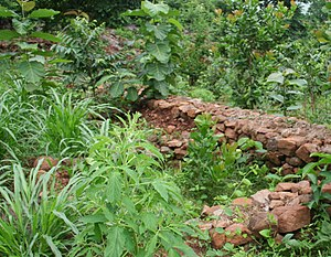 Sustainable agriculture - Walls built to avoid water run-off