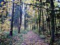 Wanderweg - panoramio (119).jpg