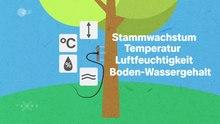 Datei:Wann wachsen Bäume?.webm