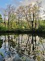 Wasserspiegelung im Naturschutzgebiet Heisinger Bogen.jpg
