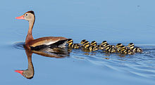 Water birds - South Florida - June 2015.jpg