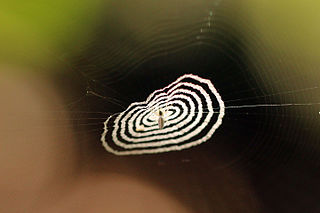 <i>Cyclosa</i> Genus of spiders