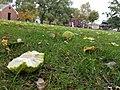 Westover Park (31060337335).jpg
