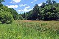 Wetland in Menomin Park, Menomonie, WI (5910098154).jpg