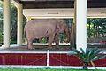 White Elephant Insein.jpg