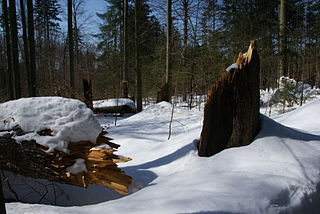 trees uprooted or broken by wind