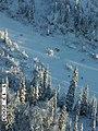 Wolf radio tracking, Denali, 20032003 (20ac9c75-02d5-4a67-af94-738aed8c15c2).jpg