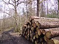 Woodpile and Path - geograph.org.uk - 141154.jpg