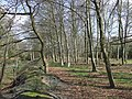 Woods by old Railway, Pillaton, Staffordshire - geograph.org.uk - 398219.jpg