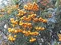 Wzwz tree 16d.jpg