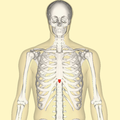 Xiphoid process frontal.png