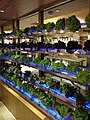 Yata Tsuen Wan Store L4 Water Vegetables 20130628.jpg