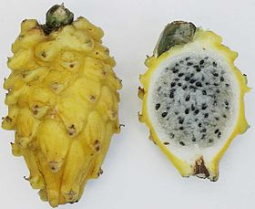 Yellow pitaya.jpg