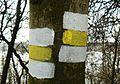 Yellow trails (Lusowskie Lake).JPG