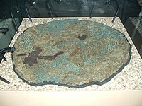 Yetholm type shield, South Cadbury 01.JPG