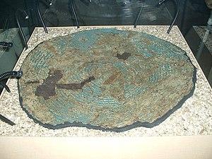 Yetholm-type shield - Yetholm-type shield from South Cadbury. Displayed at Museum of Somerset, Taunton.