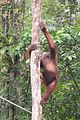 Youngster climbs tree (26182083084).jpg