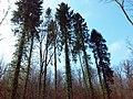 Zabierzów, Poland - panoramio (5).jpg